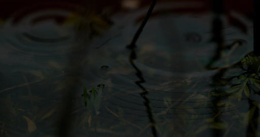 Ripples in Murky Pond Water Footage
