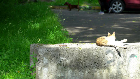 Cat licks paws, lying in the sun Stock Video Footage