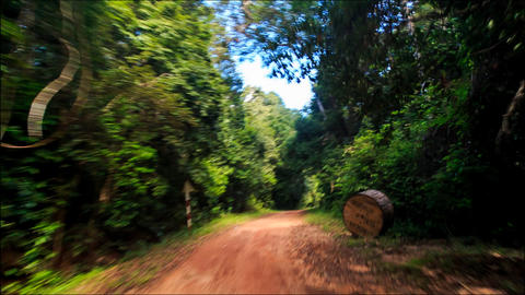 Moving along Shadow Sunny Dirt Road after Rain in Tropic Forest Footage