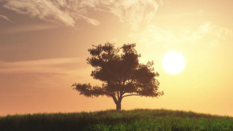 4K Lonely Tree on Summer Field in the Sunset Sunrise 1 Animation