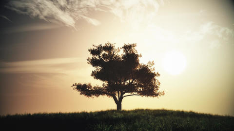 4K Lonely Tree on Summer Field in the Sunset Sunrise 2 stylized Animation