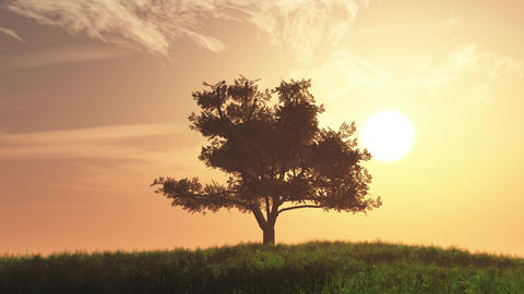 4K Lonely Tree on Summer Field in the Sunset Sunrise 4 Animation