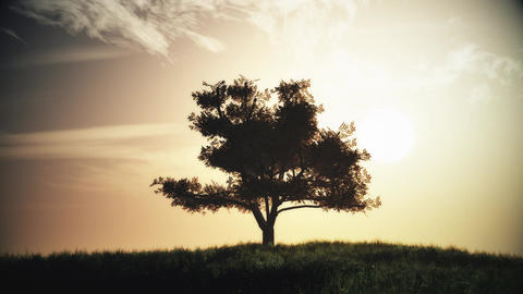 4K Lonely Tree on Summer Field in the Sunset Sunrise 5 stylized Animation