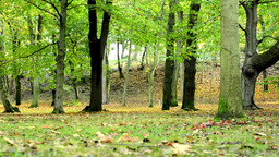 Autumn park (forest - trees) - fallen leaves - grass Footage