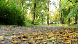 Fallen leaves on road - Autumn park (forest - trees) - people in background Footage