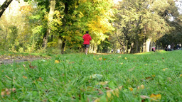 Autumn park (trees) - woman runs (sport) - grass - sunny Footage
