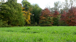 Autumn park (forest - trees) - colored trees - grass Footage