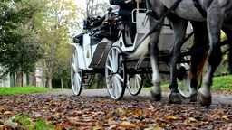 Autumn park (trees) - people walking - coach (horse carriage) - fallen leaves Footage
