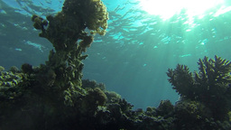Sun rays under water with corals Footage