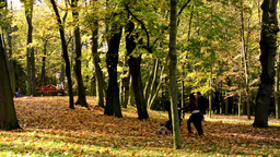 Playground - people relax - Autumn park (forest - trees) - Fallen leaves - famil Footage