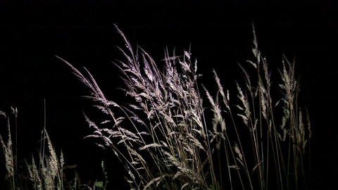 Yellow Dry Grasses Waving In The Wind Evening Under The Light Of A Reflector 62 stock footage