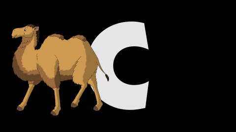 Letter C and Camel (foreground) Animation