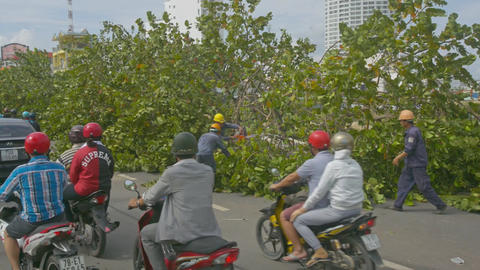 Citizens Drive Vehicles Past Workers Removing Branches from Road Footage