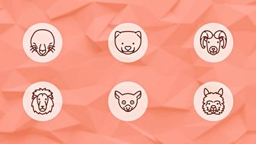 Animals Icons After Effects Template