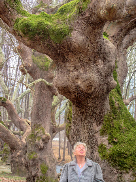 An actress of great age in the ancient forest Foto