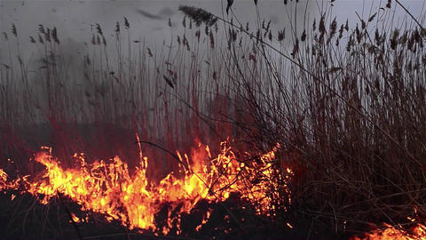Fields of dry reeds on fire put a person who wants to clean up the place 2 Live Action