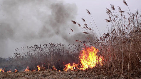 Fields of dry reeds on fire put a person who wants to clean up the place 4 Live Action