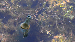 Bottle that floats on a lake among vegetable scraps and other debris 1 Footage
