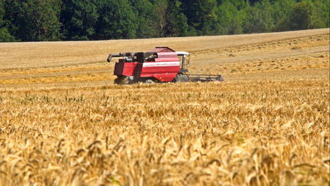 Combine harvester back in wheat field Footage