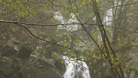 Waterfall in beech forest in mountains at spring Footage
