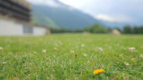 Flight over a meadow with green grass. Georgia, Kazbegi Archivo