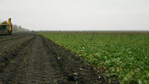 Agricultural vehicle harvesting sugar beets Footage