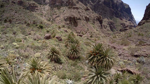 Mountain gorge with palm trees. Tenerife Canary Islands, Spain. Aerial view GIF