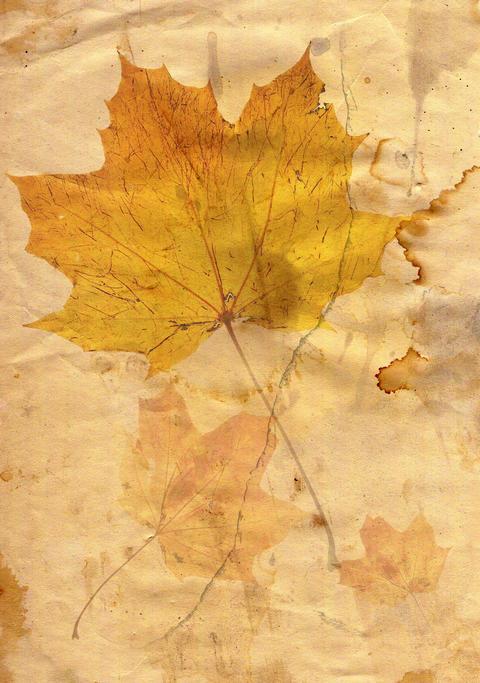 Autumn leaf フォト