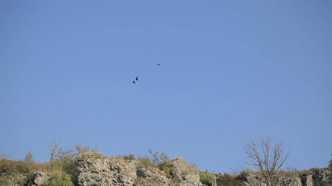 pair of birds soar high in the sky above the rocks. The concept of respect for Archivo