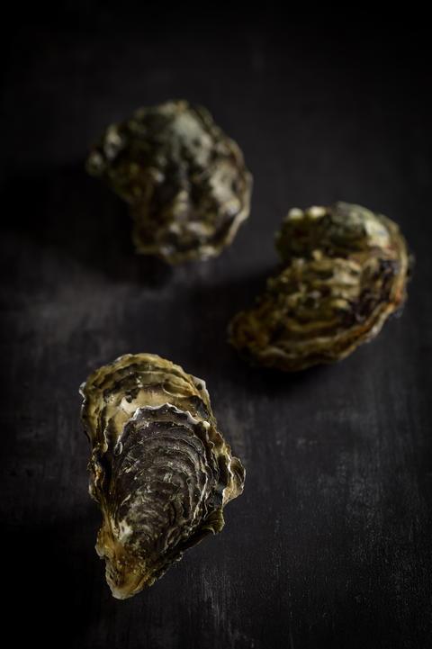 Raw oysters on the graphite board Fotografía