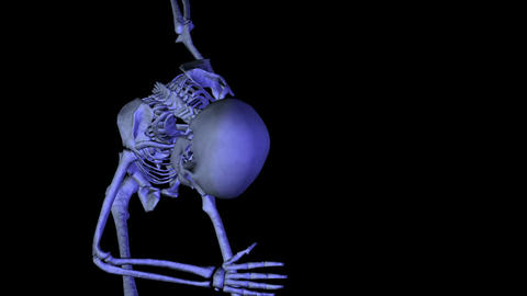 Skeleton dancing bow Stock Video Footage