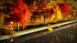 1056 Autumn Park with falling leaves, rain and canal Stock Video Footage