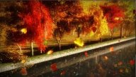 1056 Autumn Park With Falling Leaves, Rain And Canal stock footage