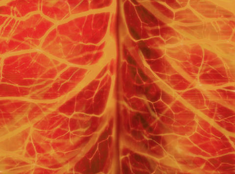 Nerve System Orange : VJ Loop 014 Stock Video Footage