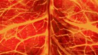 Nerve System Orange : VJ Loop 014 stock footage