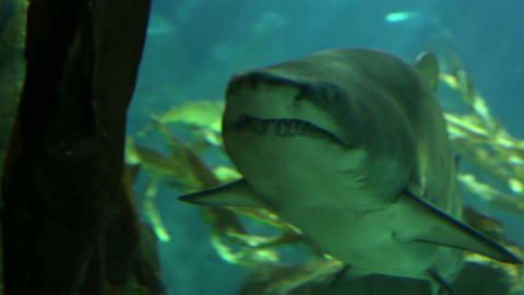 Shark in underwater wild life Stock Video Footage