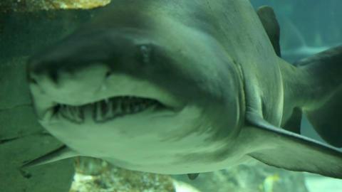Shark in underwater wild life Footage