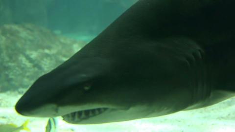 Shark in underwater wild life Stock Video Footage