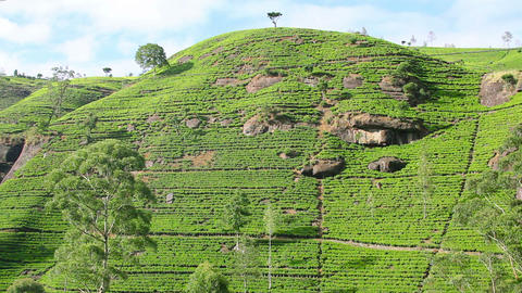 Sri Lanka tea garden mountains Footage