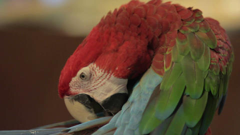 parrot bird Stock Video Footage