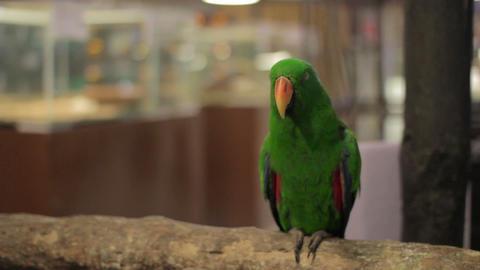 parrot bird Footage