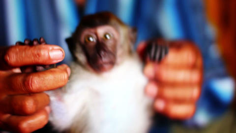 man holding small monkey Stock Video Footage