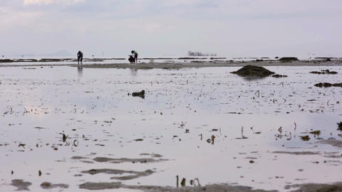gathering oyster during low tide Stock Video Footage