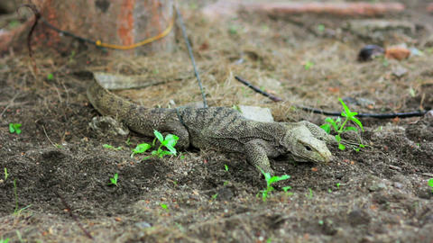 lizard in forest Stock Video Footage