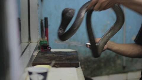 snake blood wine shop Stock Video Footage