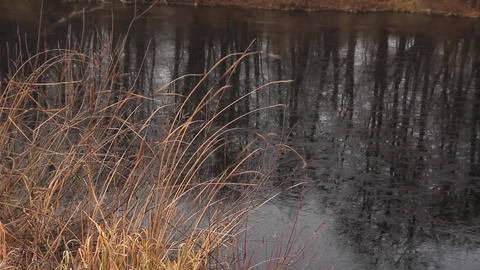 dried cattail and freezing lake Archivo
