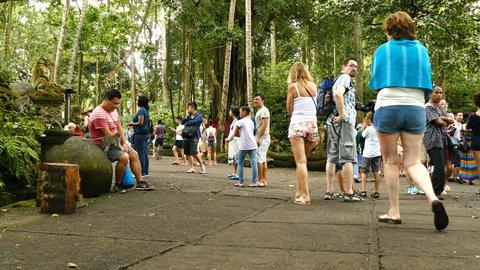 Tourists and monkeys in monkeyforest Ubud, Bali, Indonesia Footage