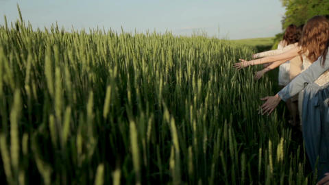 Beauty romantic girl walking alone through the green wheat field and touching Footage