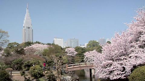 Cherry Blossoms at Shinjuku Gyoen Park with Shinjuku Skyline and DoCoMo Building Footage
