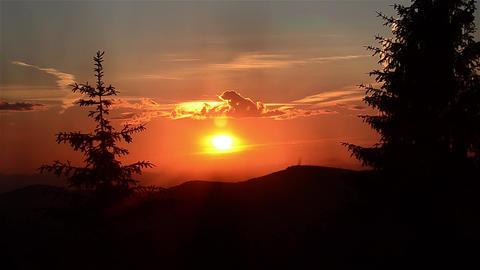 Sun reddish sunset over a fir forests 29 Footage